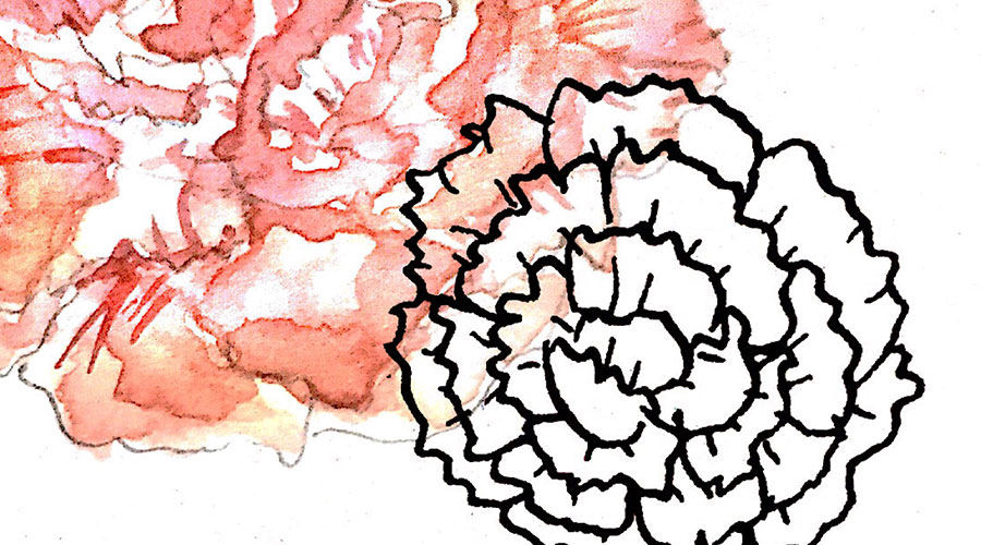 carnations in watercolor and ink