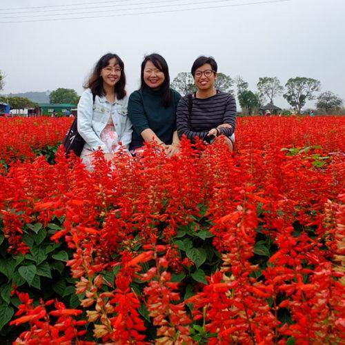 Zhongshe Flower Farm